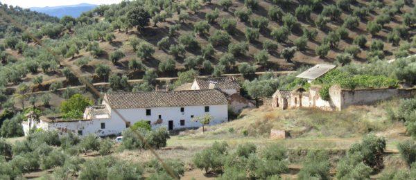 CO136 – Posadas Nuevas, Adamuz, Cordoba – cortijo complex for sale