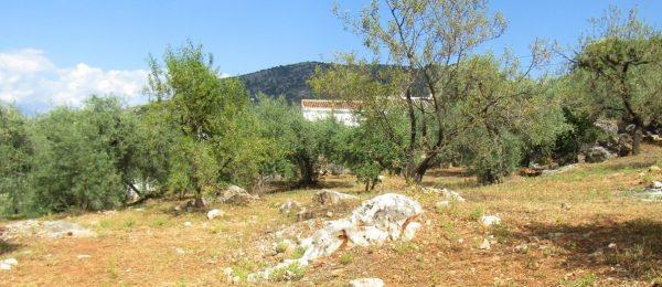 AX989 – Finca Fuente Hurtado, country house with land, Comares