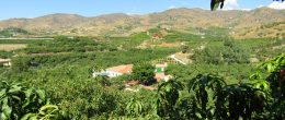 AX1019 – Cortijo 'MJ', country house with avocado farm, Velez-Malaga