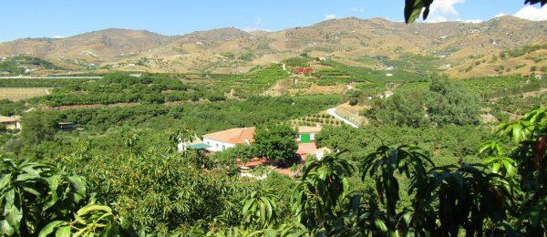 AX1019 – Cortijo 'MJ', country house with avocado farm, Velez-Malaga
